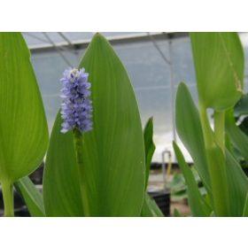 Tavi növények